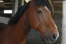 Horses and all things equestrian / The wonderful world of horses and all those goes with it, including pics of our own horse, Kelston Matisse (Jay).