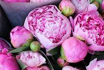 Flowers / by Tiffany Rausch