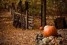 Fall - Falling in love with color / by Teri Redford