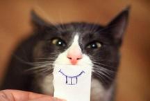 Cat-tastic / by Valerie Brower