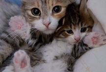 Cats / by Rita Pospeshil Drobny
