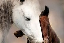 Mums & Babies / by Doreen Cumberford