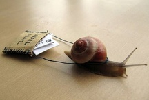 Snails...love them...