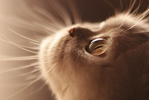 Cats (Felis Catus)
