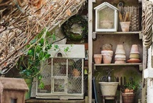 Garden and Shed Collectibles / by Anastasia Riversleigh