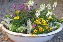 Container Gardens / All kinds of things can become a garden, containers of all colors, shapes and sizes.