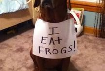 Pet Shaming / by Marie Roe