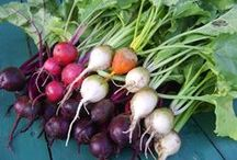 Beets / I pulled beets on a crisp September morning. -Lisa Strohauer / by Lisa Strohauer
