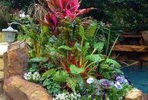 gardening / landscapeing / by Donna Wilson Hendricks