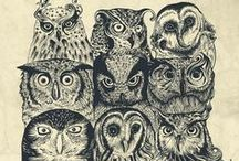 The Parliament / Where the owls are