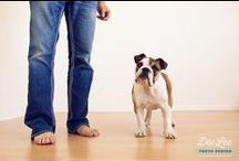 """Life with dogs / Ideas to spice up a shoot with """"man's best friend"""" :)"""