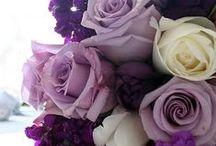 purple / color