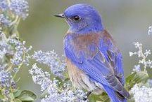 NATURE/BIRDS / by Faye Dehner