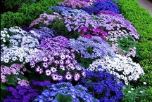 Garden Inspirations / I've discovered that gardening is my new therapy! / by Jo Sholl