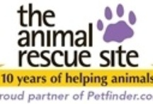 The Animal Rescue Site / We are the custodians of this earth and all who live on it. It's a huge responsibility. One which many disregard. The abuse they allow, take part in, instigate or advocate is shameful and must be stopped. Staying quiet makes you complicit. If you see something, say something. Better yet, do something. They can't speak their pain. But their eyes scream in volumes. Don't turn away. / by Black Caviar