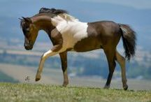 A Passion for Horses V  / by Black Caviar