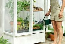 Greenhouses / by Home Farm Ideas