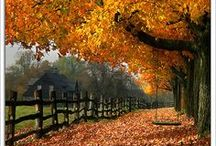 Autumnal Fall / by Black Caviar