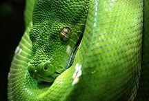reptiles et amphibiens / crocodiles, serpents, tortues, lézards, grenouilles, crapauds / snakes, turtles, lizzards, frogs / by Arcadia Corner