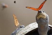 Amazing animals / by Kathy Christie