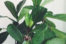 ::botany:: / by Emily Kathryn Winship