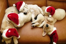 :::Christmas Cats & Dogs::: / Welcome to the Christmas Cats & Dogs Group Board! This board is for festive cat and dog photos only, unrelated pins will be removed. If you would like to join, pinterest asks you to follow Christmas Cats & Dogs. We will send invites to our followers regularly...have fun! / by Healthy Pets