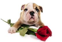 :::Valentine's Pets::: / Welcome to the Valentine's Pets Group Board! This board is for Valentine's themed pets pics only, unrelated pins will be removed. If you would like to join, Pinterest asks you to follow Valentine's Pets. We will send invites to our followers regularly...have fun! / by Healthy Pets