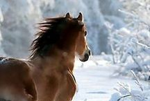 A Horse is a Horse Of Course Of Course / All things equine / by Gina Baratono