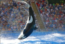 Sea World - Orlando, FL / by Rosen Hotels & Resorts Orlando, Florida