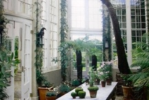 CONSERVATORY  / by Alyson Mowat