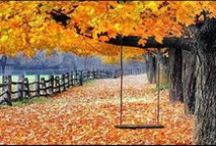 Fall into Foliage  / Leaves changing colors is one of the most beautiful seasonal transitions of nature. / by Budget Travel