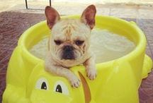 ::::Summer Time Pets:::: / Welcome to the Summer Time Pets Group Board! This board is for Summer themed pets pics only, unrelated pins will be removed. If you would like to join, Pinterest asks you to follow Summer Time Pets. We will send invites to our followers regularly...have fun!