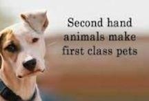 Reasons dogs are the best! / by KellyAnn