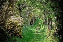 Secret Garden / by Alexandra Hood