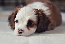Cutest Animals!!! / by Bella Sheleise