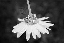 #Wedding Rings / ♥ More wedding ideas … wedding rings ♥