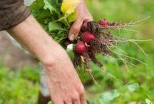 ORGANIC GARDEN / Tips on growing your own organic garden.