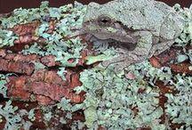 Rick Pas Paintings 2 / Amphibians