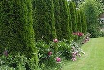 Planning For Privacy! / Screens, plantings & fencing ideas to increase privacy for your yard.