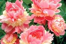 flower index...