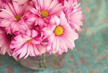 {in bloom} / by Katie Jolly