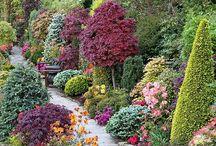 Garden / by Jessica Blake