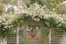 fence roses, walls, gates