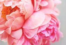 fleur peur