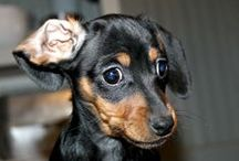 Doggie's / by Gladys Cole