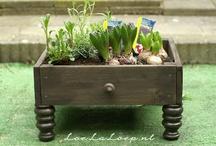 garden / by Mary Pedersen