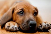 Too Cute For Words / Precious pooches and other irresistibly adorable animals.