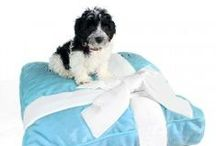 Awesome Pet Products / For the spoil-worthy furry friends in your life.