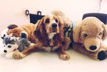 DogVacay HQ & News / News and snapshots from our Santa Monica office, home to an amazing team of humans and pups.