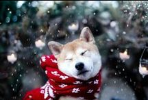 Holiday Dog Pictures / It's the most wonderful time of the year...to give thanks to our pets!